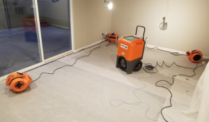 Drying Out A Home During A Mold Removal Job